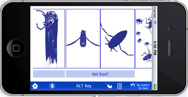 speedbug